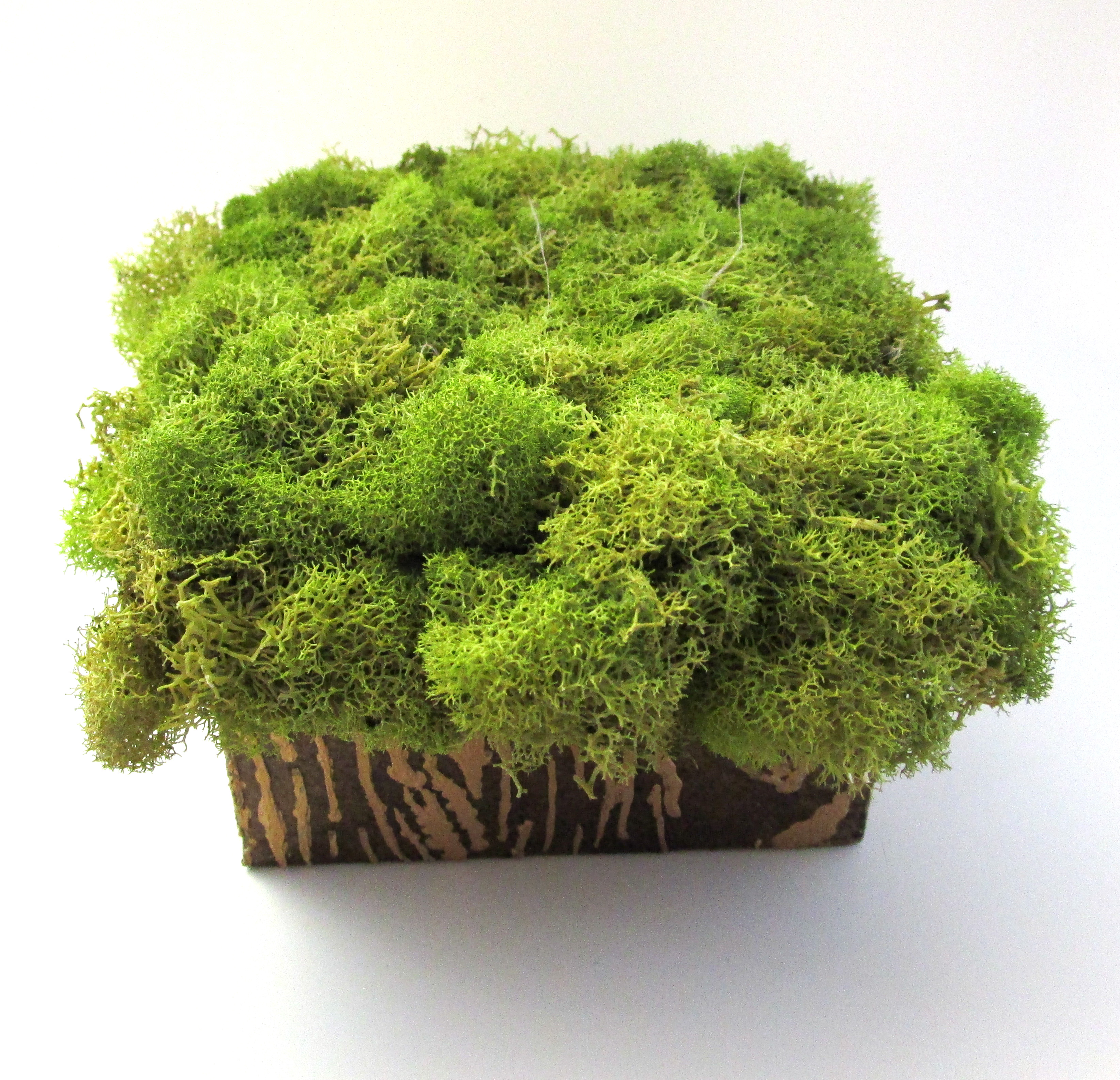 Stump Box